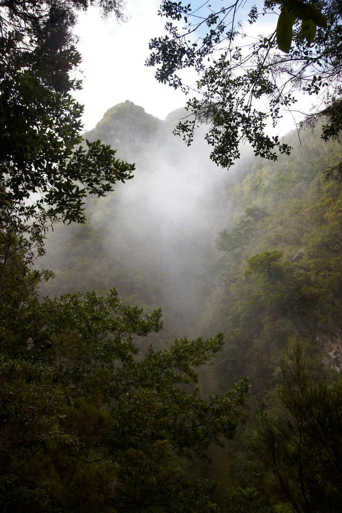 Levada del Caldeirão Verde